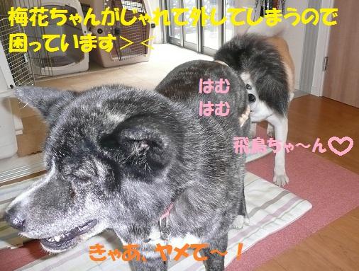 f0121712_13314976.jpg