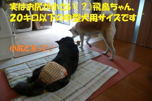 f0121712_1544121.jpg