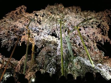 「桜・お花見の会」_f0259324_14304552.jpg