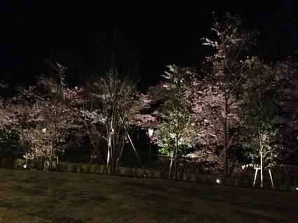 「桜・お花見の会」_f0259324_1430959.jpg