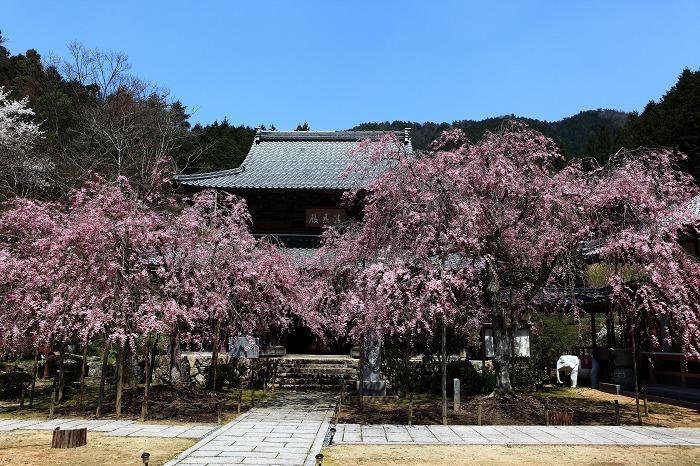 2014 桜 大同寺_a0294534_21174573.jpg