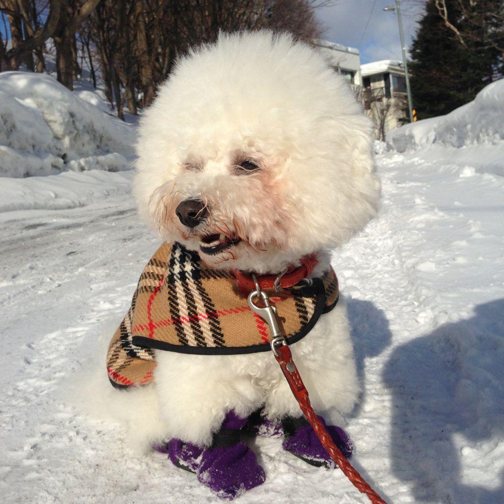 雪道のお散歩 デビュー_f0209434_233998.jpg