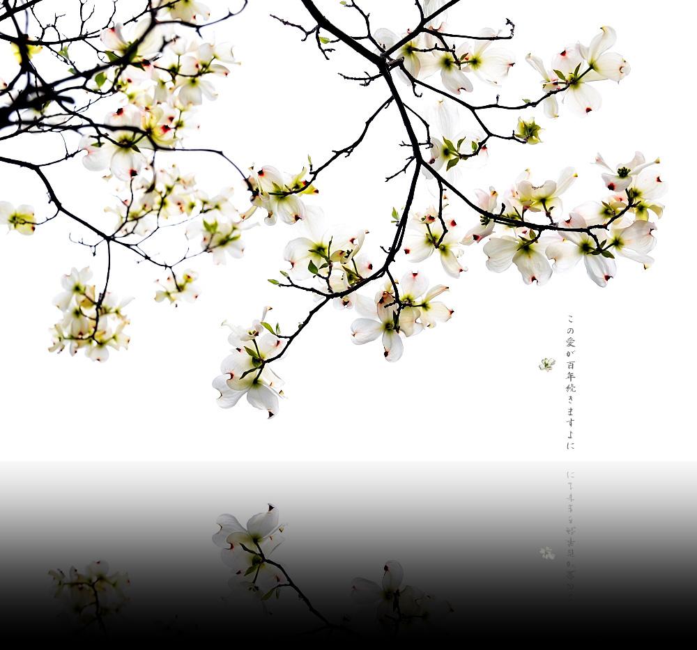 c0095342_2011881.jpg