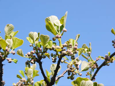 株式会社旬援隊はこんなとこです!満開の八重桜と敷地内の様子_a0254656_1816024.jpg