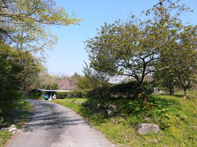 株式会社旬援隊はこんなとこです!満開の八重桜と敷地内の様子_a0254656_1854343.jpg