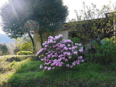 株式会社旬援隊はこんなとこです!満開の八重桜と敷地内の様子_a0254656_19104861.jpg