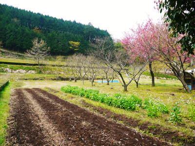 株式会社旬援隊はこんなとこです!満開の八重桜と敷地内の様子_a0254656_19325623.jpg
