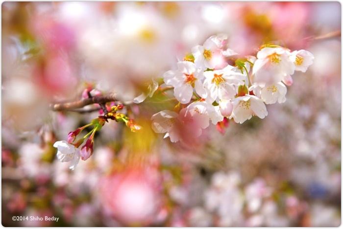 花咲く予感 Blooming_e0082860_21021674.jpg