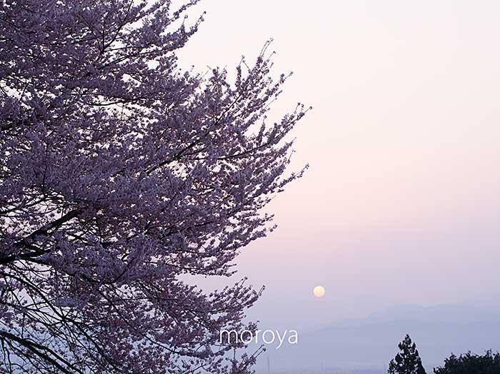 田多井のもう一つの桜_c0085877_7245342.jpg