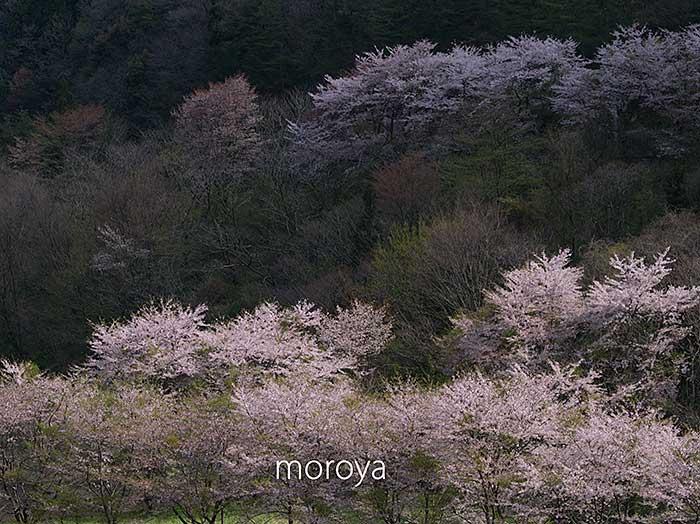 小松市大杉谷_c0085877_744459.jpg