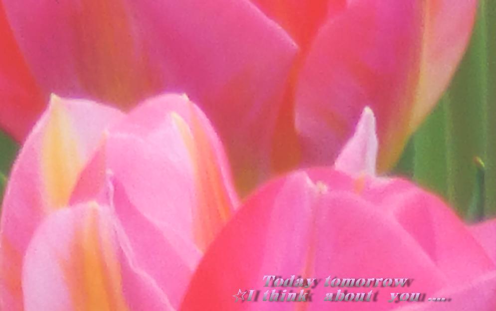 c0311178_15013367.jpg