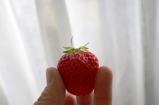 イチゴ選びのポイントって?_e0167593_1155843.jpg
