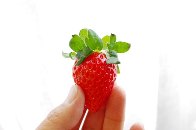 イチゴ選びのポイントって?_e0167593_1162122.jpg