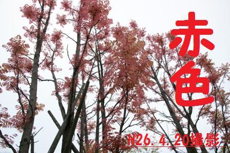 f0203094_1161930.jpg