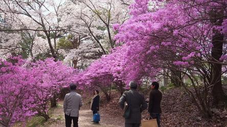 馬見塚のお花見_e0187897_1743019.jpg