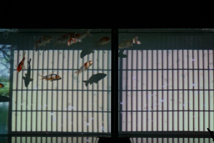 金魚-3_e0135098_2156487.jpg