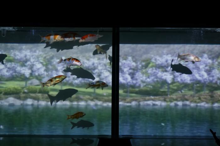 金魚-3_e0135098_21565976.jpg