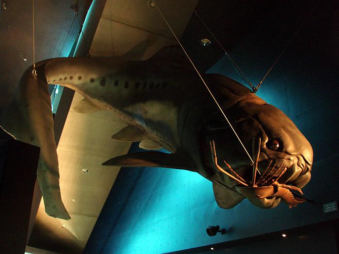 「化石水族館 太古の魚類展」_f0292806_09224976.jpg