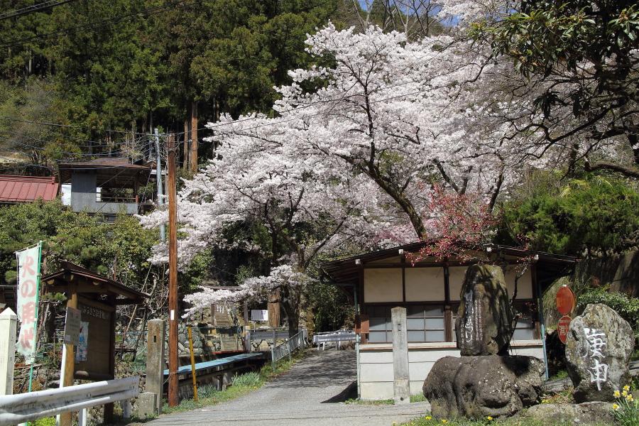 桜満開、天気良好、煙…すっかすか〜 - 2014年桜・秩父 -  _b0190710_2245381.jpg