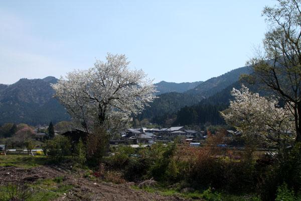 洛北大原の春_e0048413_21114166.jpg