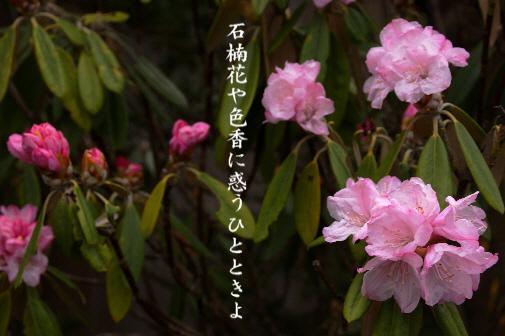 石楠花_e0099713_228405.jpg