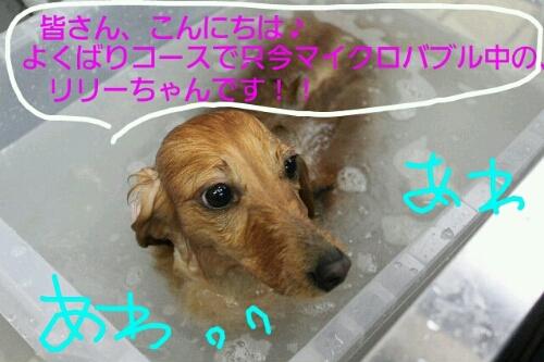 b0130018_22432543.jpg