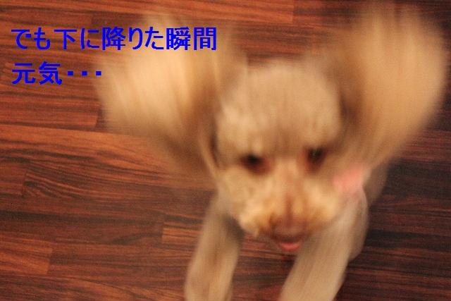 b0130018_34592.jpg