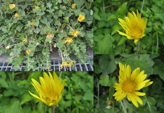f0139520_17435693.jpg