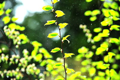 一雨ごとの「春」が行きつ戻りつ。三寒四温などと_b0169522_21205714.jpg