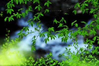 一雨ごとの「春」が行きつ戻りつ。三寒四温などと_b0169522_2121848.jpg