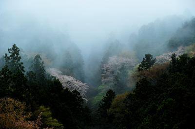 一雨ごとの「春」が行きつ戻りつ。三寒四温などと_b0169522_21271991.jpg