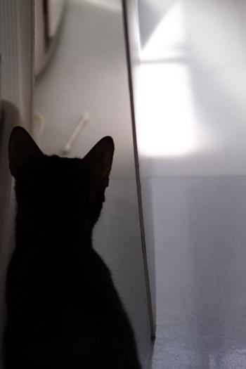 [猫的]秘蔵綿棒_e0090124_223458.jpg