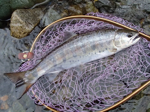 ・Fishing Dialy_a0165135_18302217.jpg