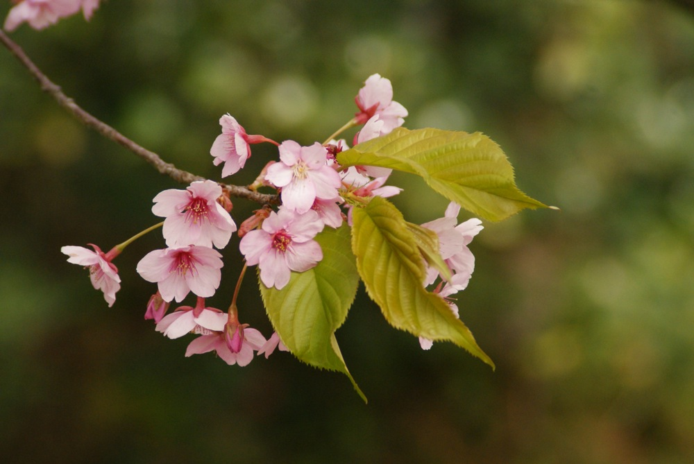 桜の博物館_d0001843_2375757.jpg