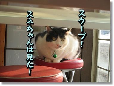 スネちゃんは見た☆_b0151748_11362541.jpg