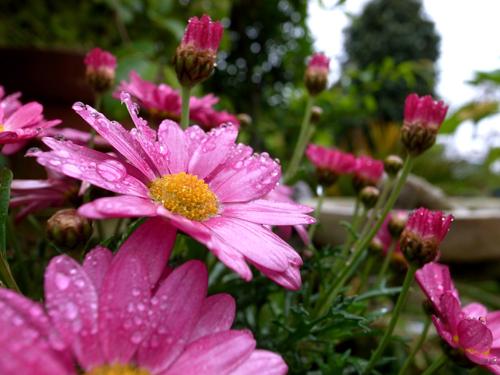 『花が咲いたらもう一度会おう』福岡からいよいよ東京へ!_e0071652_61818.jpg