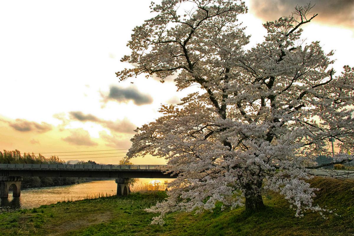 桜 2014 丹波                   _f0021869_20505580.jpg