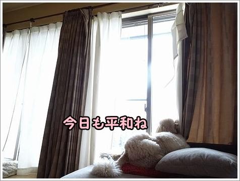 悲惨なカーテン。_b0111376_11334070.jpg