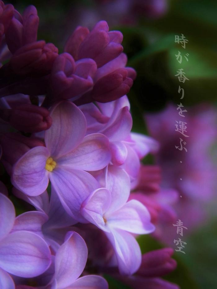 d0199578_22561185.jpg