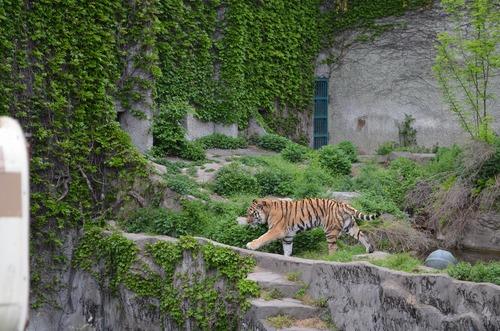 天王寺動物園_b0277979_1962578.jpg