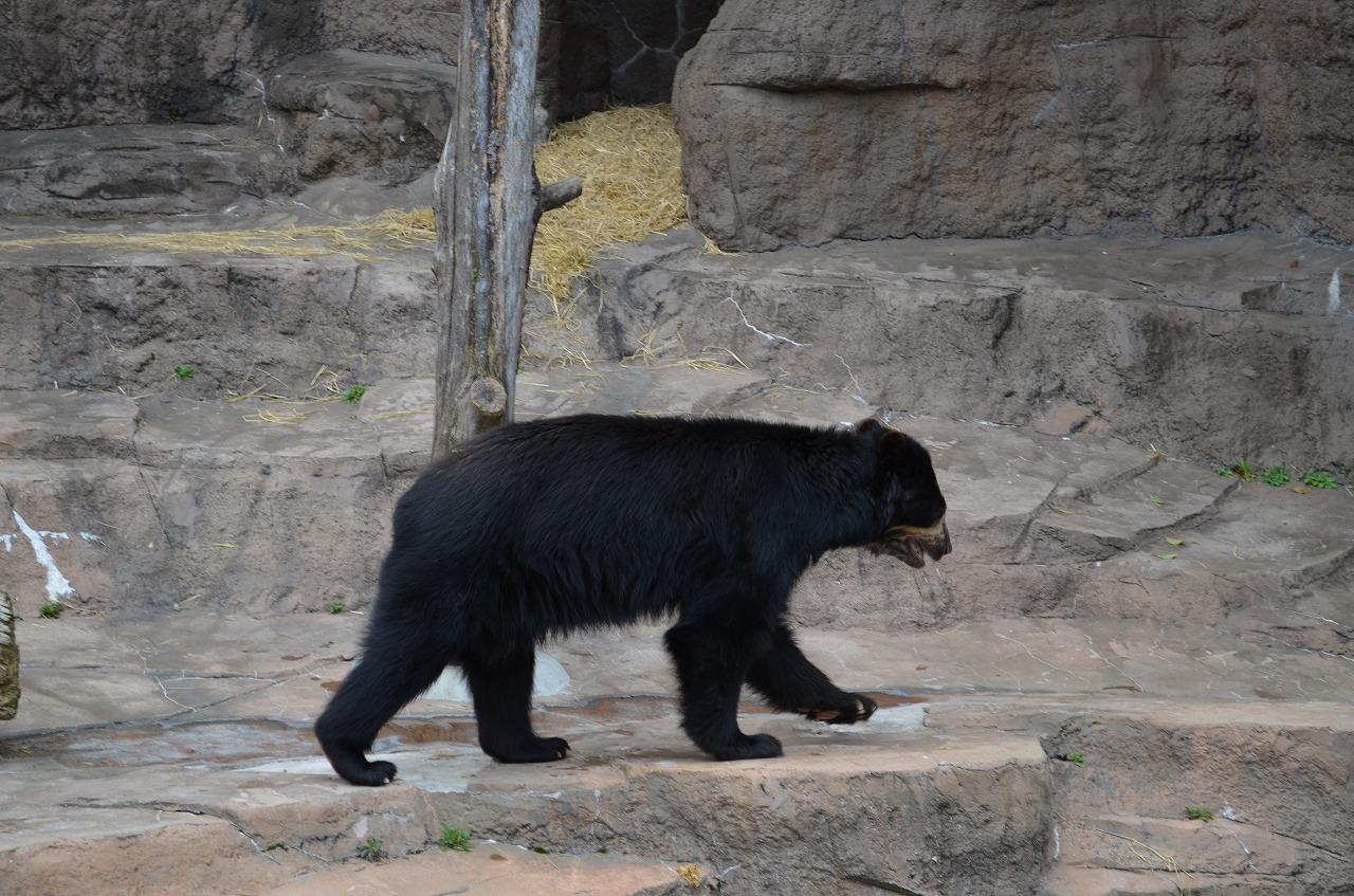 天王寺動物園_b0277979_1962836.jpg