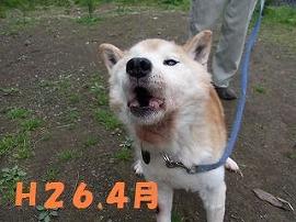 b0038381_17332815.jpg