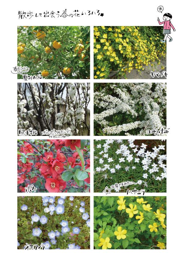 散歩道で見た植物_d0272182_21162767.jpg
