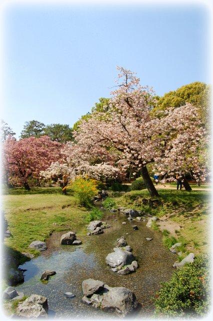 御所の八重桜_c0057390_2354022.jpg