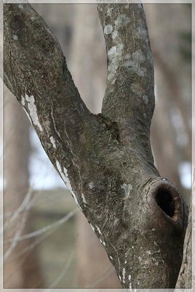 木のエロ気_e0235910_23554182.jpg