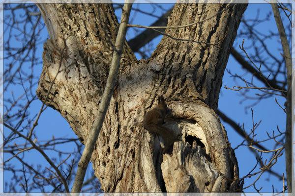 木のエロ気_e0235910_23581375.jpg