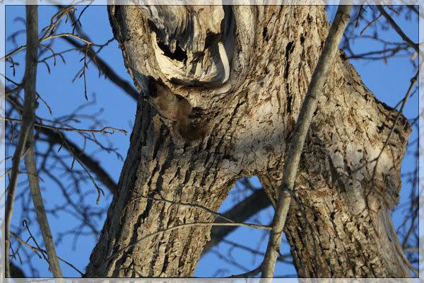 木のエロ気_e0235910_23585546.jpg