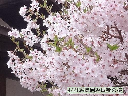 d0048312_2010156.jpg