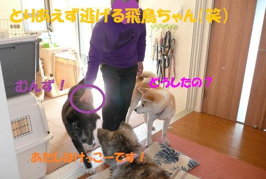 f0121712_1584371.jpg