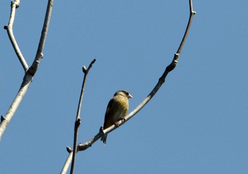 野鳥の季節_e0162117_18533129.jpg